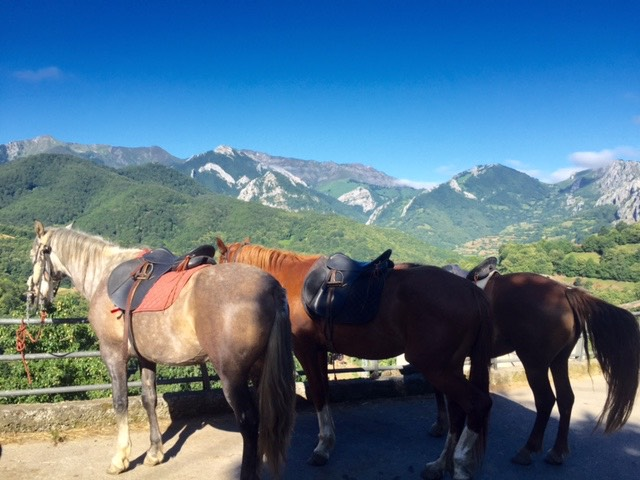 caballos asturias mindfulness